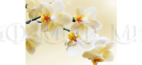 Фотопечать Лео орхидея