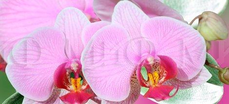 Фотопечать Орхидея 2