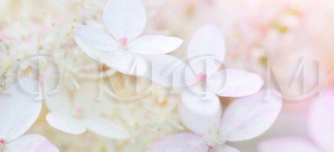 Фотопечать Вишневый цвет