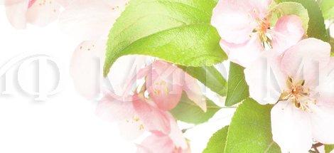 Фотопечать Яблоневый цвет